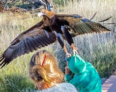 A photograph of a huge bird of prey grabbing on to a boy's head has gone viral—here are possible reasons for its behavior.