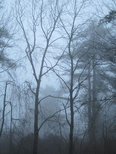 4x6 Photograph Bare Winter Trees and Fog Tree by lake1221 on Etsy, $3.99 | See more about winter trees, photographs and winter.