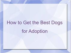 How to Get the Best Dogs for Adoption by John12134 via authorSTREAM