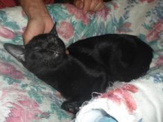 PEPE - Gato adoptado - AsoKa el Grande