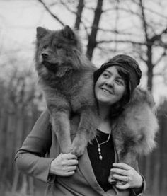 chow chow jumps on woman 255x300 Chow Chow Breed Information, Training ...