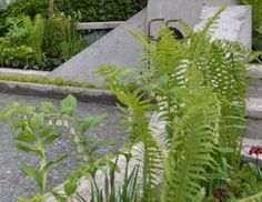 Planting shady borders Andy: As RHS Chelsea Flower Show approaches I thought it would be great to get Gold Medal winning garden designer Kate Gould to share her thoughts on planting shady gardens. Most gardens have shady situations to deal with and many small urban gardens are in shade for...