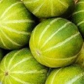 MELONS SUITABLE FOR UK