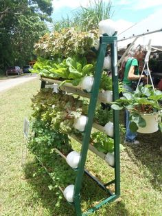 gardening in PVC tubes on a rack
