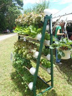 gardening in PVC tubes on a rack