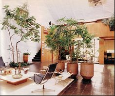 Indoor potted plants, break-up large open-plan rooms with height, texture & softness. Also Feng Shui experts claim added benefits from indoor plants - cleaning the air, & giving energy to a space. I have to agree - its beautiful to have nature indoors! #pamellis