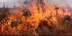 Ζάκυνθος: Σε εξέλιξη μεγάλη φωτιά στο χωριό Κοιλιωμένος