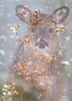 DEER in the mist, sweetmontana