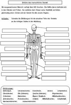 die 81 besten bilder auf skelett anatomie in 2017 totenk pfe katzen und abstrakt. Black Bedroom Furniture Sets. Home Design Ideas