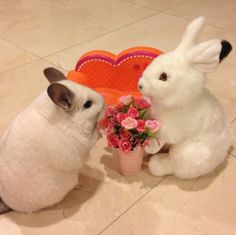 Oh you shouldn't have.  Wait, yes you should have. Bubu The Chincilla is getting some flowers from her one and only Valentine Bun.