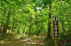 【奥日光】一人旅で癒しの秘湯!一泊二日でいける、森林浴もできる温泉