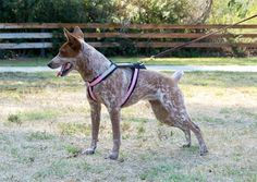 Alpine Outfitters Adjustable Urban Trails Harness