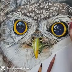 😱😱Wow this is amazing art from ❤️🦉 . Bird Drawings, Animal Drawings, Colorful Drawings, 3d Art Drawing, Drawing Owls, Painted Rock Animals, Painted Owls, Owl Pictures, Owl Photos