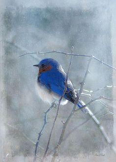 Blue Bird Photograph by Fran J Scott - Blue Bird Fine Art Prints and Posters for Sale
