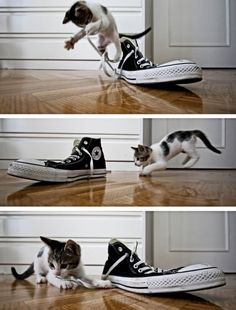 Even this cat loves to play with All Stars