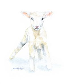 White Lamb Watercolor Painting  11 x 14  Giclee by SusanWindsor