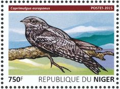 European Nightjar stamps - mainly images - gallery format