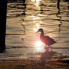 #lagodiseo #theRomanticChoice #inLombardia Atmosfere di fine agosto il lato romantico del lago prende il sopravvento. Photo by @claudiocolosio a #iseo #lakeiseo #inLombardia365 #visitBrescia #visitBergamo http://ift.tt/2bUF09E - http://ift.tt/1HQJd81