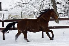 My Girlfriends Horse | Ryan McGinn | Flickr