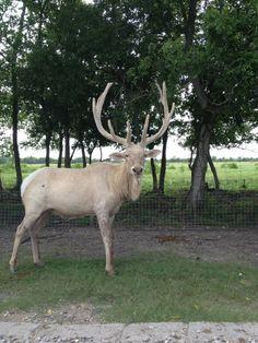 Bayou Wildlife Park