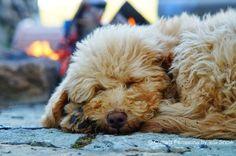 Bently - Cultura Femenina Dogs, Animals, Culture, Events, Feminine, Fotografia, Art, Animales, Animaux