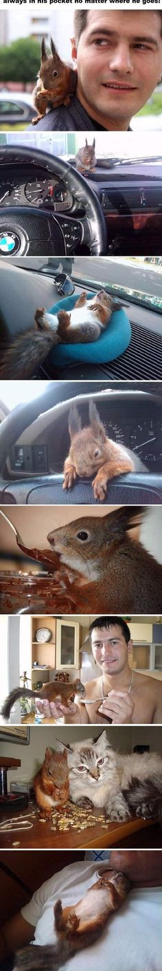 Oh my goodness! I love squirrels and What a Guy!!
