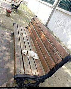 Puppy Needed A Break ....