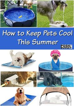 How to Keep Pets Cool This Summer