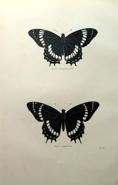 1860 Antique butterflies print, vintage butterfly engraving, papillon plate illustration, lepidoptera butterfly spring decor wall hanging. This
