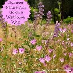 Summer outdoor fun for families: Go on a wildflower walk.