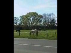 Pferde Horses