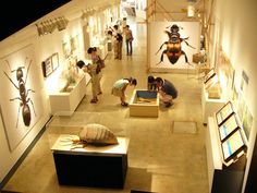 Insect museum exhibition