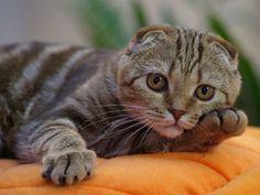retratos profesionales de gatos