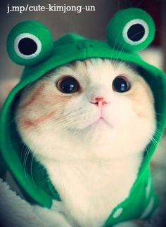 Kitty, so-so-cute-cats: i am frog not a cat miaow . - Tap the link now to see all of our cool cat collections. Cute Baby Cats, Cute Cats And Kittens, Cute Baby Animals, Kittens Cutest, Animals And Pets, Funny Animals, Cats In Hats, Kittens Meowing, Beautiful Cats