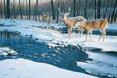 Flowing Harmony-Whitetail Deer by Jim Kasper