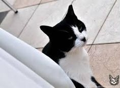 Svart Vit Katt Lanzarote i storm del 2