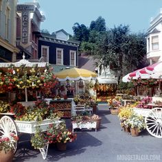 Flower Market, Main Street
