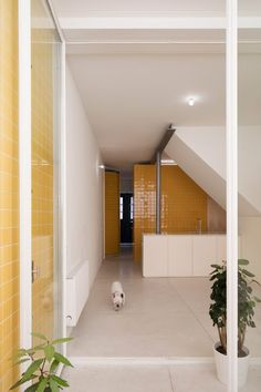 The patio connects to an open-plan living and dining area and a kitchen, which features matching yellow tiles, marble countertops and birch plywood cupboards. Indoor Slides, Yellow Tile, Adobe House, Patio Wall, Japanese House, Dezeen, Marble Countertops, Open Plan Living, Minimalist Interior