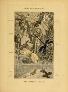 Les insectes; - Biodiversity Heritage Library