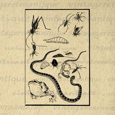 Digital Image Bugs and Snake Graphic by VintageRetroAntique