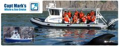 Whale Watching Nova Scotia Cape Breton Island Canada Zodiac Whale Watching Captain Mark's Whale and Seal Cruise adventures whale sightings sightseeing for whales East Coast Travel, Cape Breton, Whale Watching, Nova Scotia, Whales, Trip Planning, Seal, The Neighbourhood, Zodiac