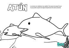 Atun, dibujos colorear peces. Recursos educativos animales