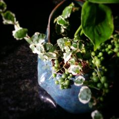 Planter   SM Pottery