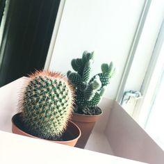 Loving my new babies