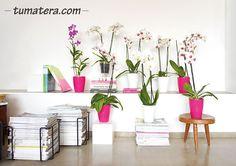 Encuentralas en: http://www.tumatera.co/products/mpa-3365-santorini/