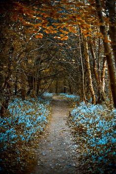 bluebells in Currabinny Woods, County Cork Ireland
