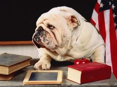 "I'm ready for you to learn me somethin'    I really need this for all my little ""bulldogs"" in my classroom!"