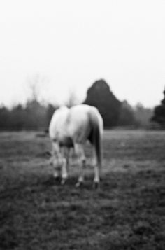 By Tristan B.  This horse lives down the road from me.