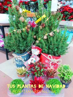 Christmas Flowers, Garden Centre, Plants