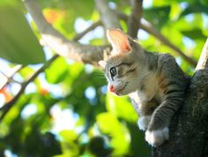 outdoormagic: Kitten par Khatawut J